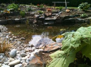 Bideford, Devon Garden Design Portfolio by Plant A Seed after 3