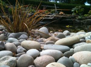 Bideford, Devon Garden Design Portfolio by Plant A Seed after 7