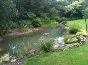 Chagford Pond, Devon Garden Design by Plant A Seed after 1