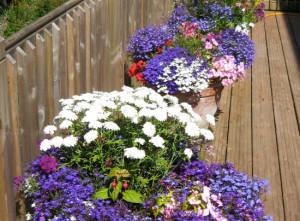 Copplestone2, Devon Garden Design by Plant A Seed after 6