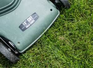 Why you should cut your grass for the winter