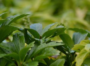 Ebford, Devon Garden Design Portfolio by Plant A Seed after 5