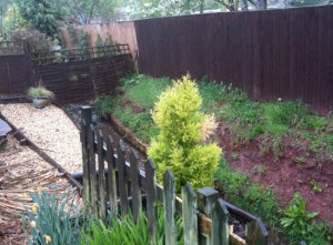 Western Lea Garden Plants, Crediton, Devon (Before) by Plant A Seed Garden Design