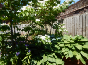 Plant A Seed Garden Design Horseguards 2 Exeter Portfolio update 1