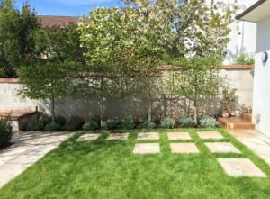 Plant-A-Seed-Garden-Design-St-Leonards-Exeter-Portfolio-update-6